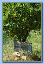 Property, tree or oranges for sale?