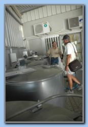 Heattreatment of the milk