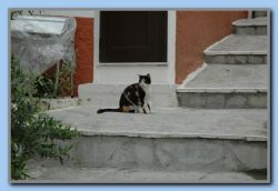 25-The cats are waiting for tourists and may be food