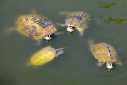 06_Potokaki_Turtles